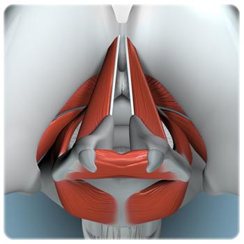 laryngology_1